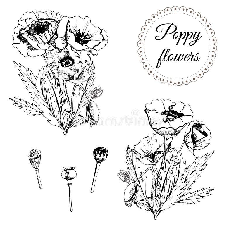 Reeks met grafische boquets van papaverbloemen met bladeren Hand getrokken zwart-wit die schets op witte achtergrond wordt geïsol stock illustratie