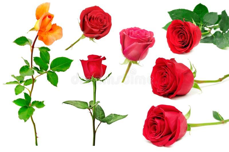 Reeks mooie rode die rozen op witte achtergrond wordt geïsoleerd royalty-vrije stock foto