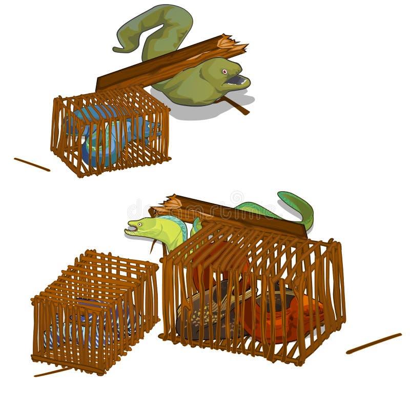 Reeks moray palingen die in de houten kooi worden gevangen die op witte achtergrond wordt geïsoleerd De vectorillustratie van het stock illustratie