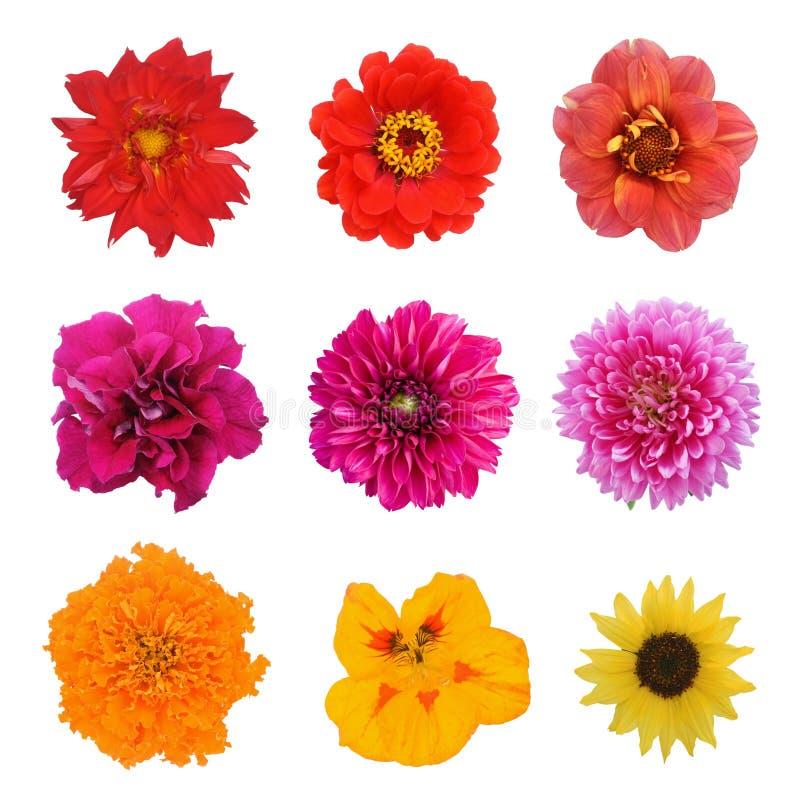 Reeks negen bloemen royalty-vrije stock afbeeldingen