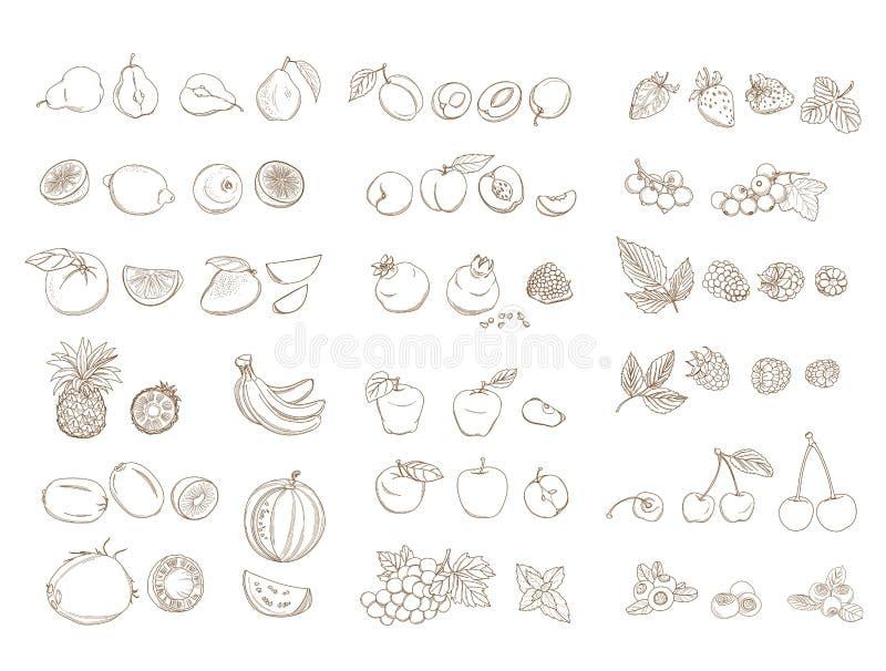 Reeks organische landbouwbedrijf verse vruchten en groenten Vector illustratie vector illustratie