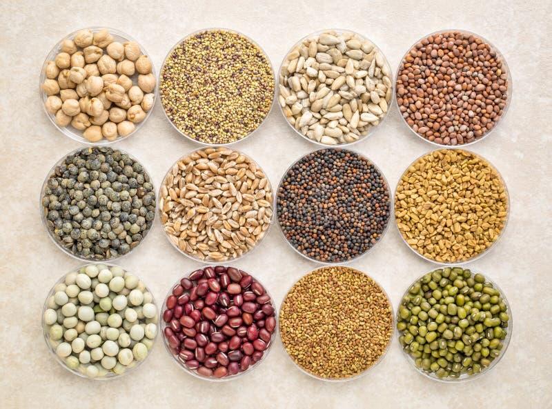 Reeks organische ontspruitende zaden en bonen stock afbeelding