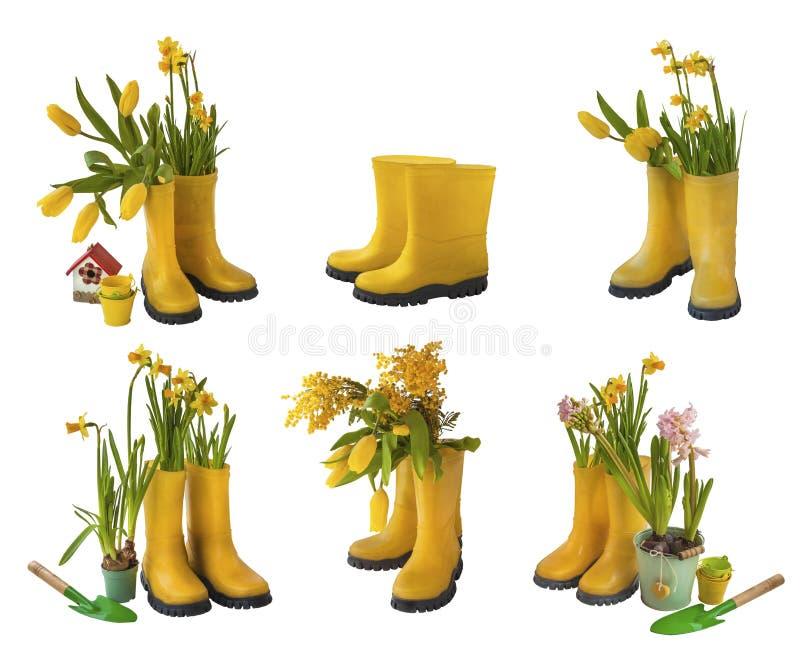 Reeks 6 paar gele gumboots en gele narcissen, tulpen, mimosa ISO royalty-vrije stock afbeeldingen