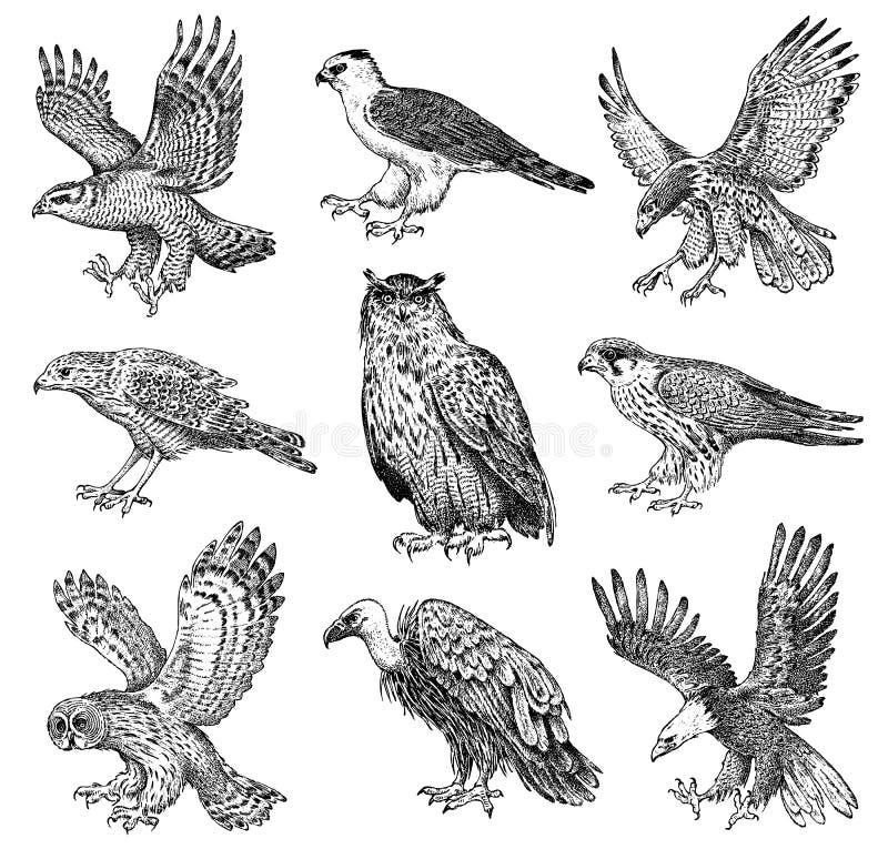 Reeks realistische vogels Goshawk, Griffon-gier, Doodsbleke plunderaar, Zwarte vlieger, Uil en adelaar Hand getrokken vectorschet royalty-vrije illustratie
