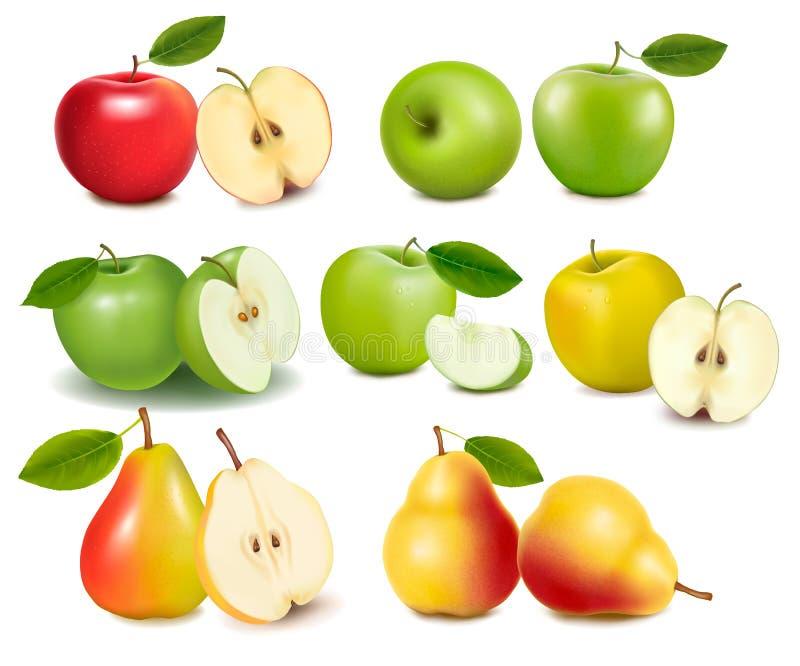 Reeks rode en groene appelvruchten. vector illustratie