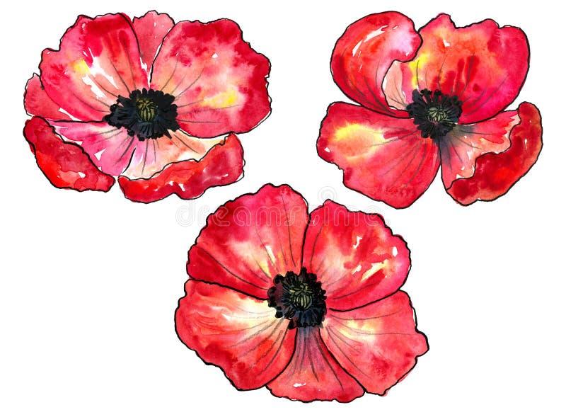 Reeks rode papavers Kleurrijke bloemen Waterverfhand getrokken die illustratie op witte achtergrond wordt ge?soleerd vector illustratie