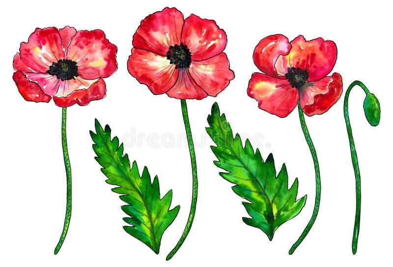 Reeks rode papavers Kleurrijke bloemen Waterverfhand getrokken die illustratie op witte achtergrond wordt ge?soleerd royalty-vrije illustratie