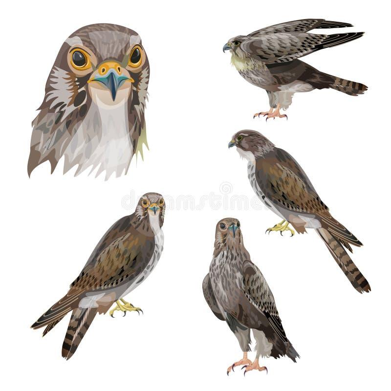 Reeks roofvogels stock illustratie