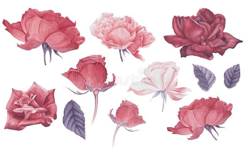 Reeks roze en rode rozen en bladeren, waterverf het schilderen