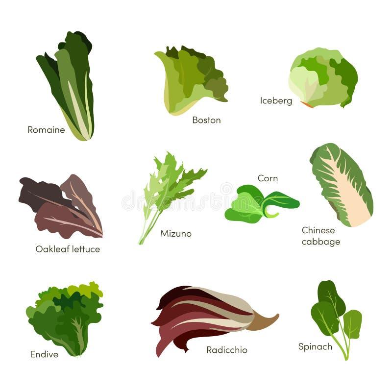 Reeks saladegreens De pictogrammen van de bladgroentensalade Vector royalty-vrije illustratie