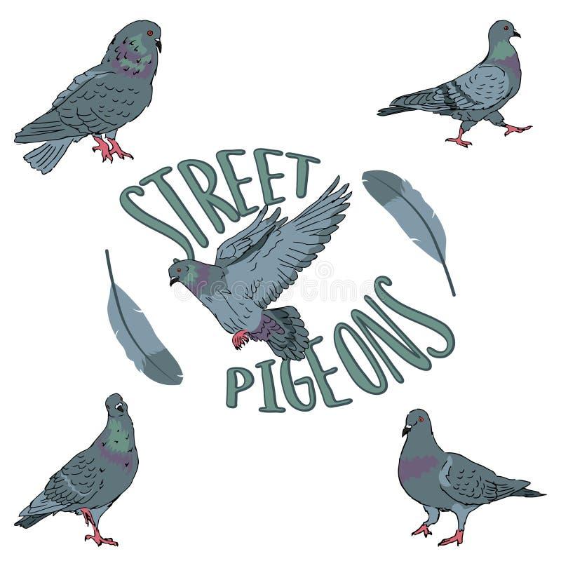 Reeks stedelijke de straatduiven van de vogelsstad op witte achtergrond met veer editable vectorillustratie stock illustratie
