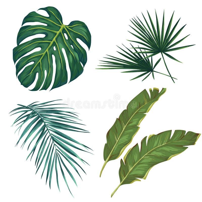 Reeks tropische bladeren Geïsoleerdj op witte achtergrond Vector illustratie royalty-vrije stock foto