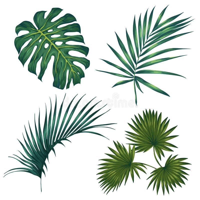 Reeks tropische bladeren Geïsoleerdj op witte achtergrond Vector illustratie royalty-vrije stock foto's