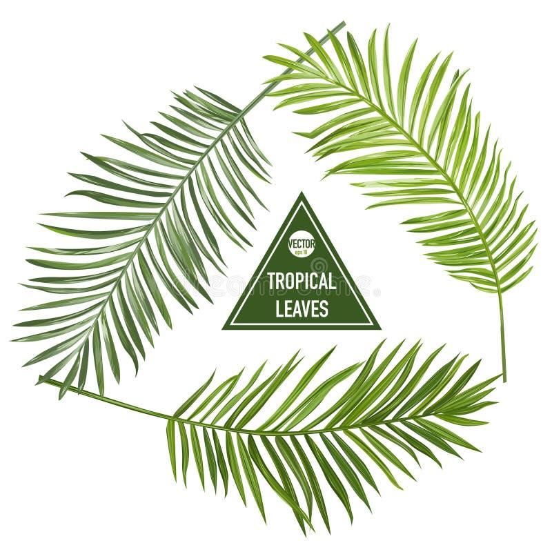 Reeks Tropische Palmbladen royalty-vrije illustratie