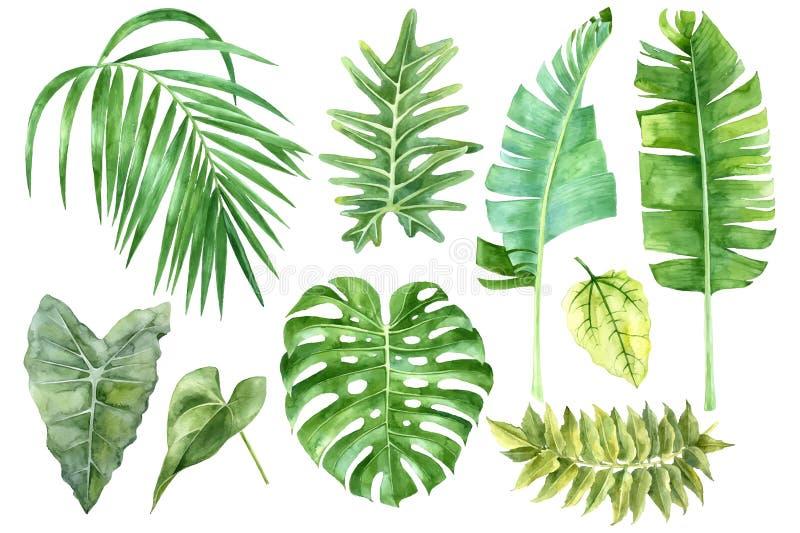 Reeks tropische waterverfbladeren stock illustratie