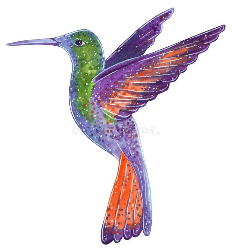 Reeks tropische wilde vogels Colibri, tropische wilde vogel vector illustratie