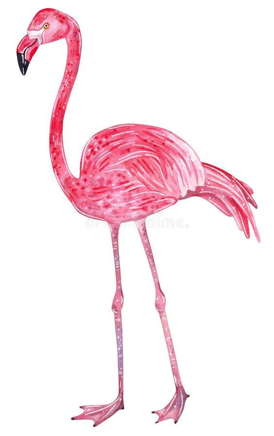 Reeks tropische wilde vogels Roze Flamingo, tropische wilde vogel vector illustratie
