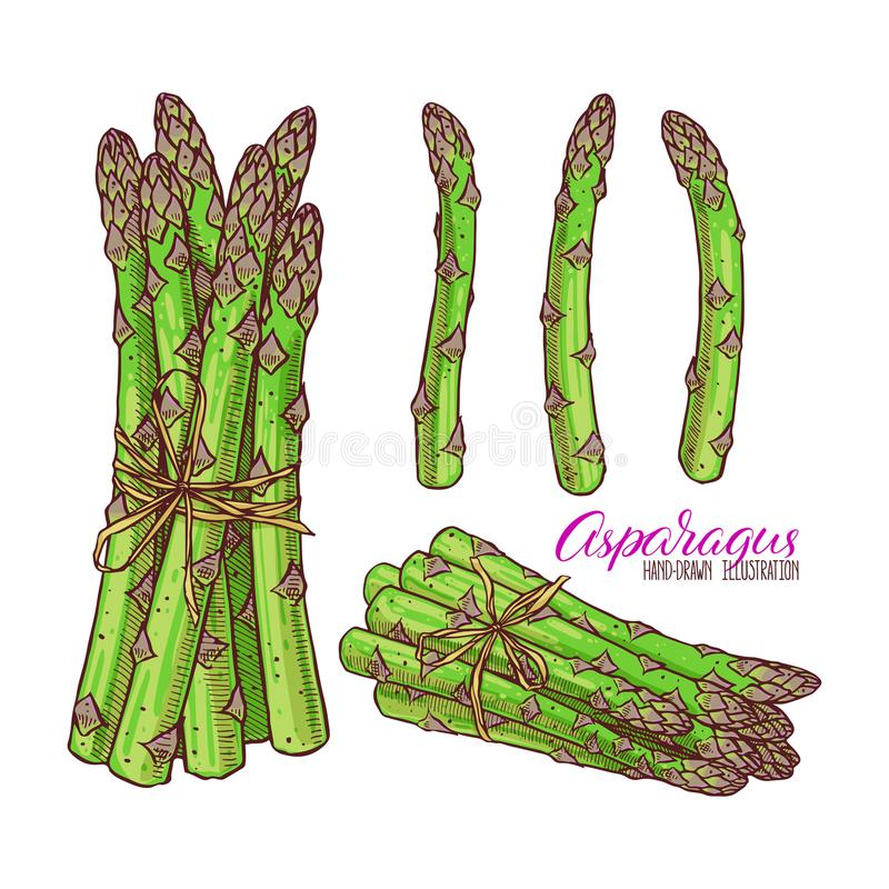 Reeks van asperge stock illustratie