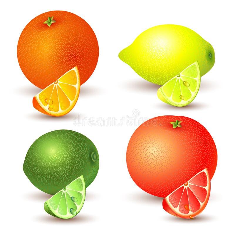 Reeks van citrusvruchten vector illustratie