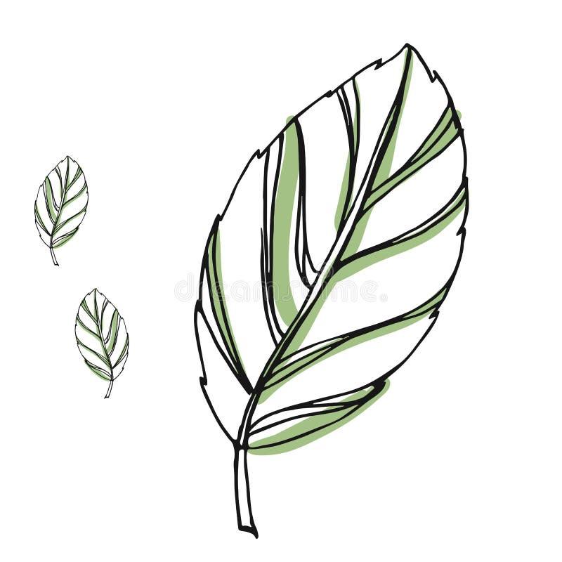 Reeks van de blad de vectortekening Geïsoleerde boombladeren Kruiden gegraveerde stijlillustratie Biologisch productschets Getrok royalty-vrije illustratie