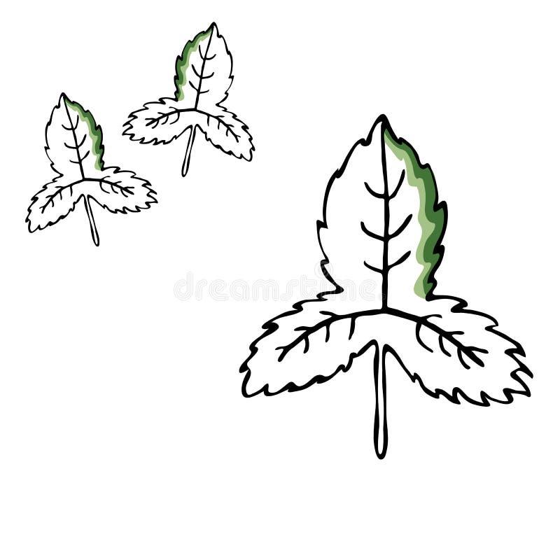 Reeks van de blad de vectortekening Geïsoleerde boombladeren Kruiden gegraveerde stijlillustratie Biologisch productschets Getrok stock illustratie