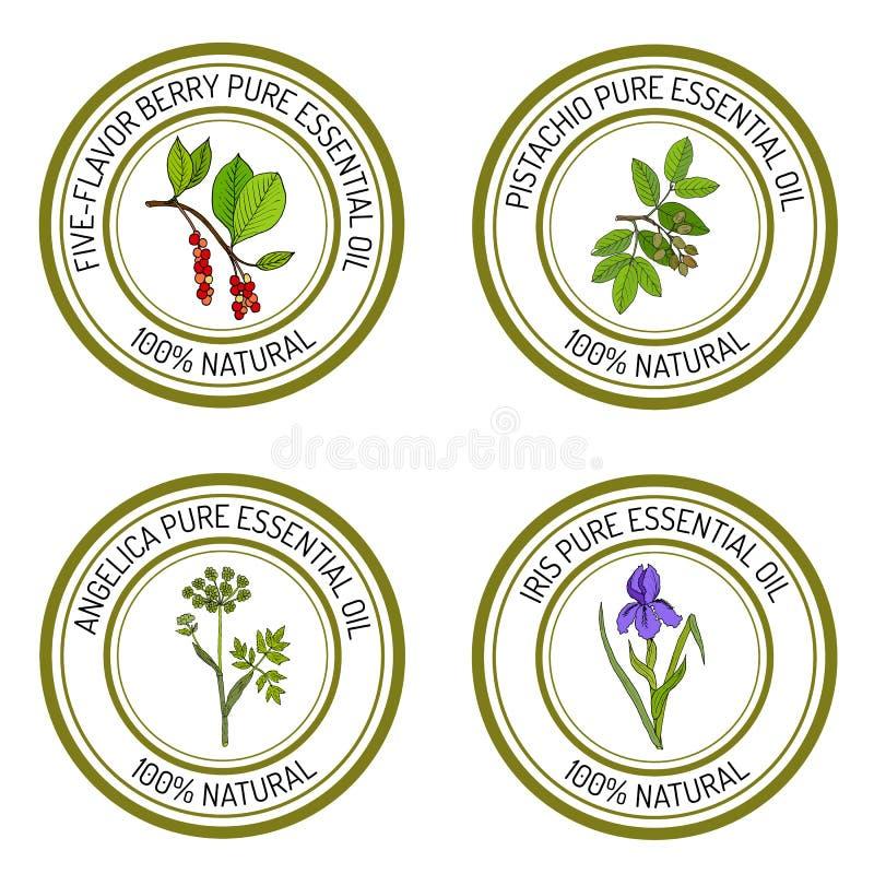 Reeks van de engelwortel van etherische olieetiketten, iris, pistache, vijf-aroma-bes vector illustratie