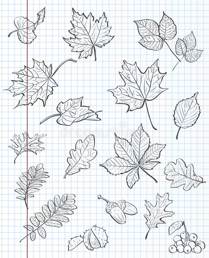 Reeks van de herfstbladeren, kastanjes, eikels en viburnum op een achtergrond van oefenboek in een kooi Zwarte contour royalty-vrije illustratie