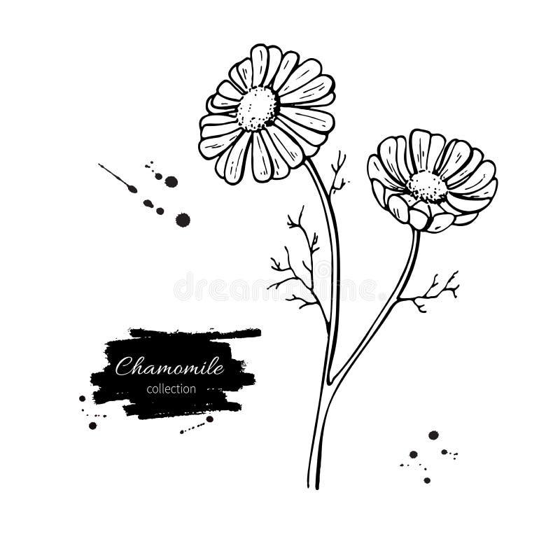 Reeks van de kamille de vectortekening Geïsoleerde madeliefje wilde bloem en bladeren Kruiden gegraveerde stijlillustratie stock illustratie