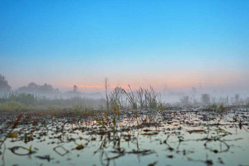 Reeks van de mistige ochtend van de landschappenherfst royalty-vrije stock foto