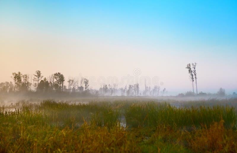 Reeks van de mistige ochtend van de landschappenherfst stock foto