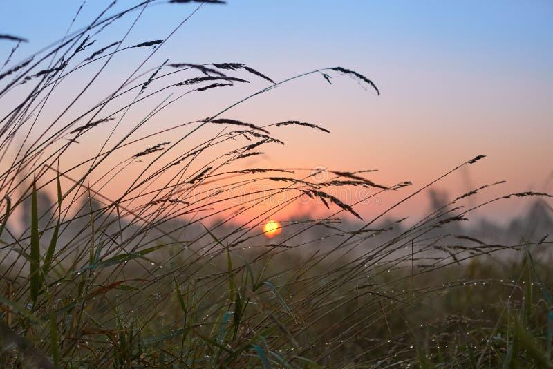Reeks van de mistige ochtend van de landschappenherfst royalty-vrije stock foto's