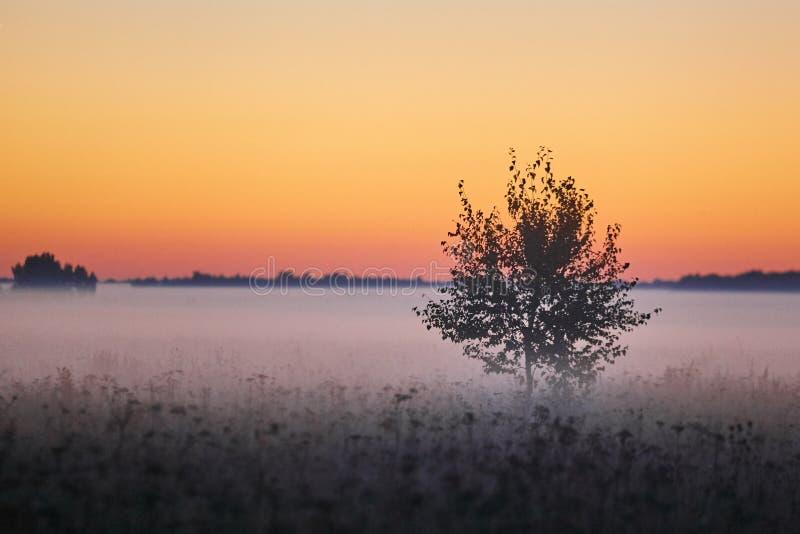 Reeks van de mistige ochtend van de landschappenherfst stock fotografie