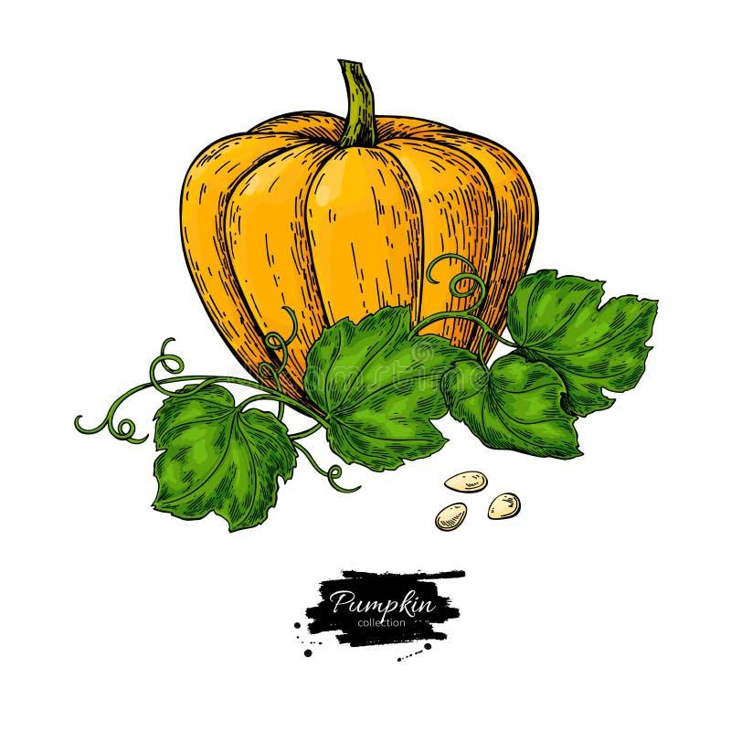Reeks van de pompoen de vectortekening Geïsoleerd hand getrokken voorwerp met gesneden stuk en bladeren royalty-vrije illustratie