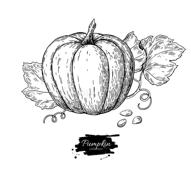 Reeks van de pompoen de vectortekening Geïsoleerd hand getrokken voorwerp met slic royalty-vrije illustratie