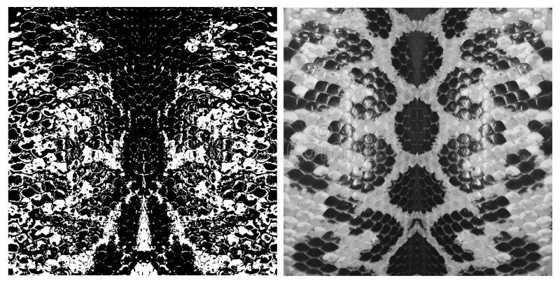 Reeks van de schalentextuur van de slanghuid Het eenvoudige ornament, kan voor giftomslag, stoffen, behang worden gebruikt Vector royalty-vrije illustratie