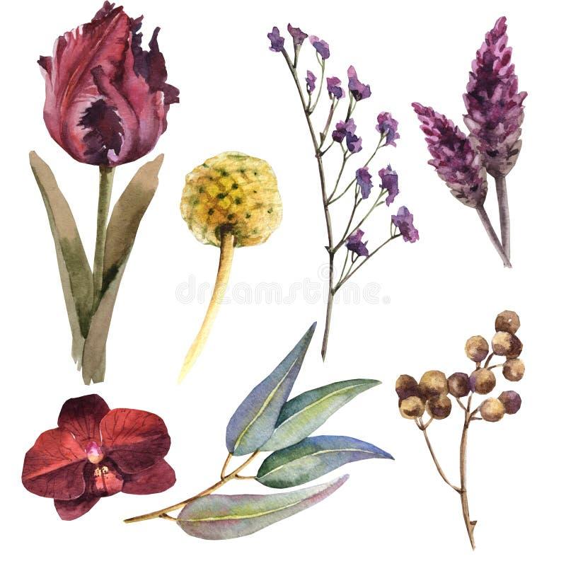 Reeks van de waterverf de kastanjebruine bloem vector illustratie