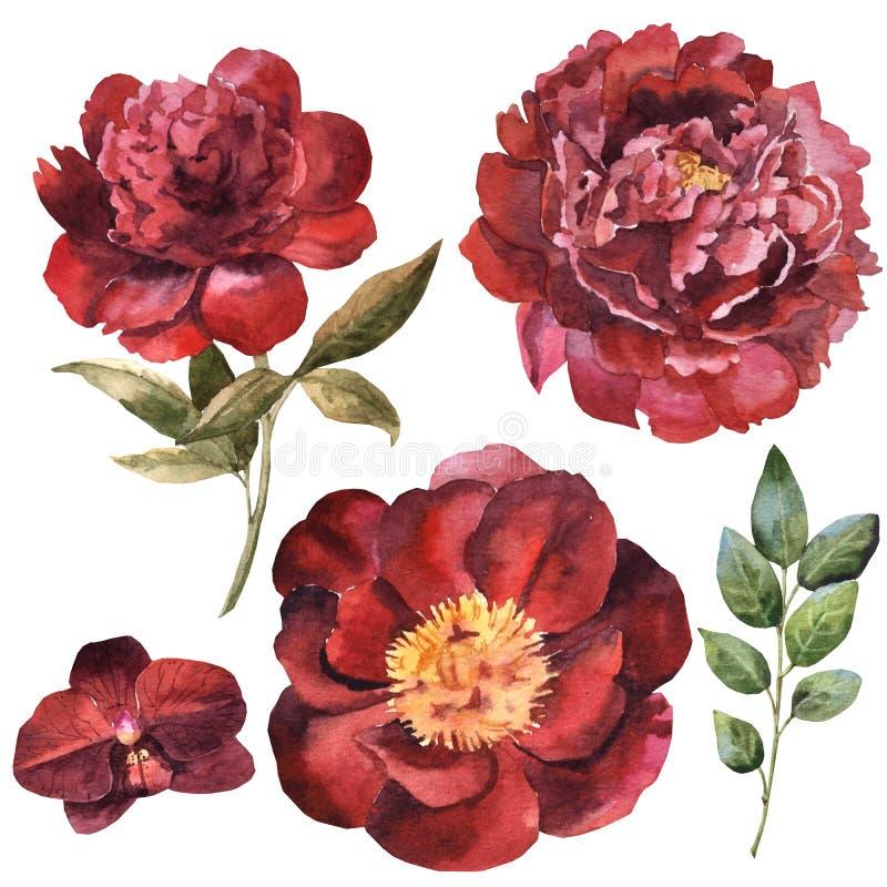 Reeks van de waterverf de kastanjebruine bloem stock illustratie