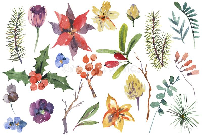 Reeks van de de winter de bloemenwaterverf elementen van het Kerstmisontwerp royalty-vrije illustratie