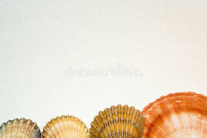 Reeks van diverse overzeese shells close-up op een witte achtergrond stock afbeeldingen