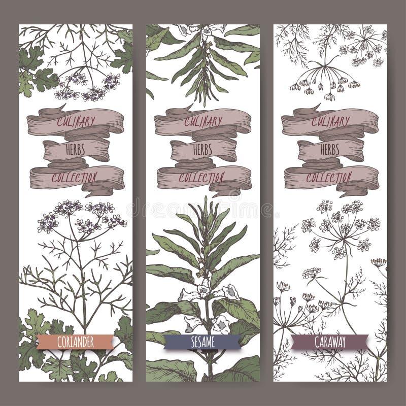 Reeks van drie kleuren vectorbanners met koriander, sesam, karwijschets Culinaire kruideninzameling royalty-vrije illustratie