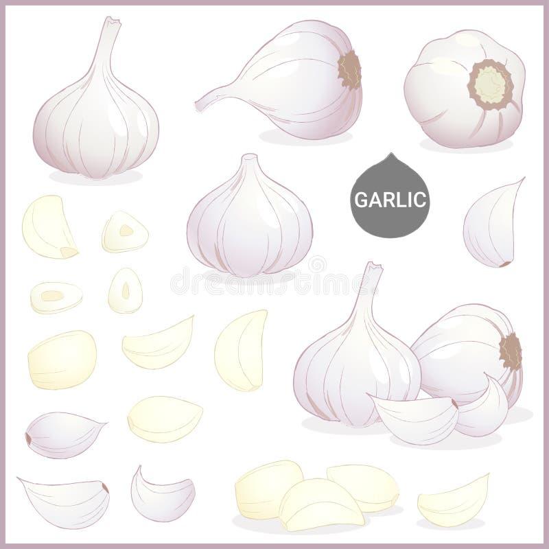 Reeks van droog knoflook plantaardig kruid in diverse besnoeiingen en stijlen in vectorillustratie royalty-vrije illustratie