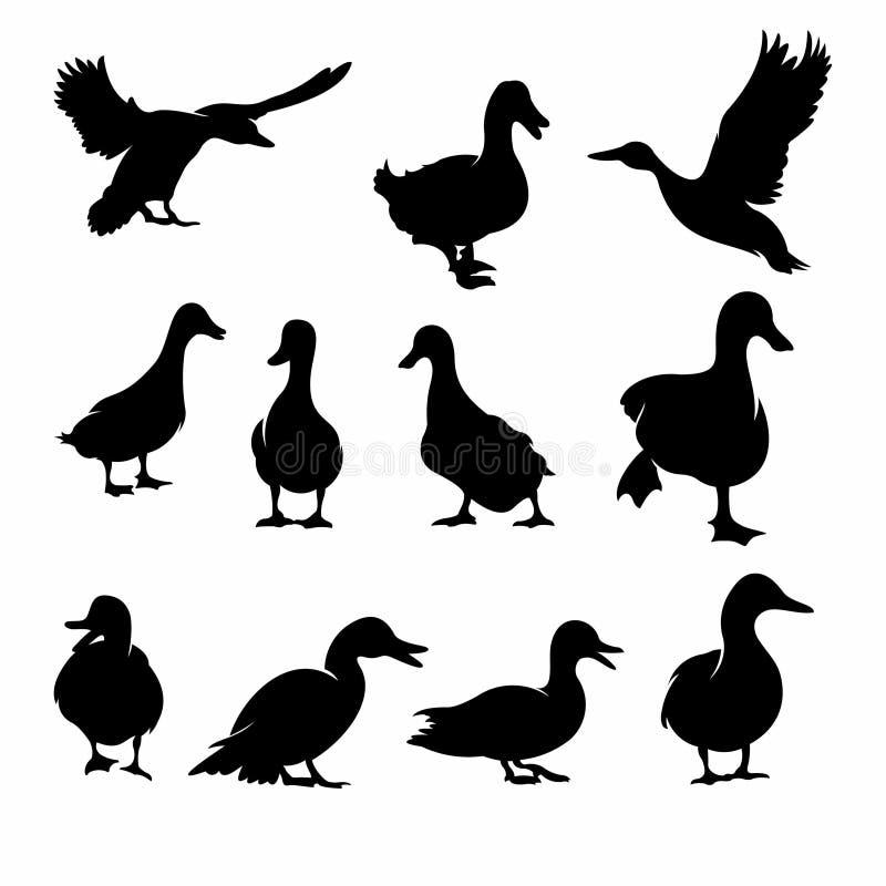 Reeks van Duck Silhouette-inzamelings vectorillustratie - Vector royalty-vrije illustratie