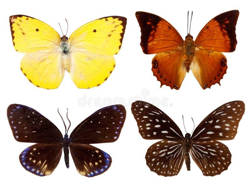 Reeks van exotische vlinder stock foto