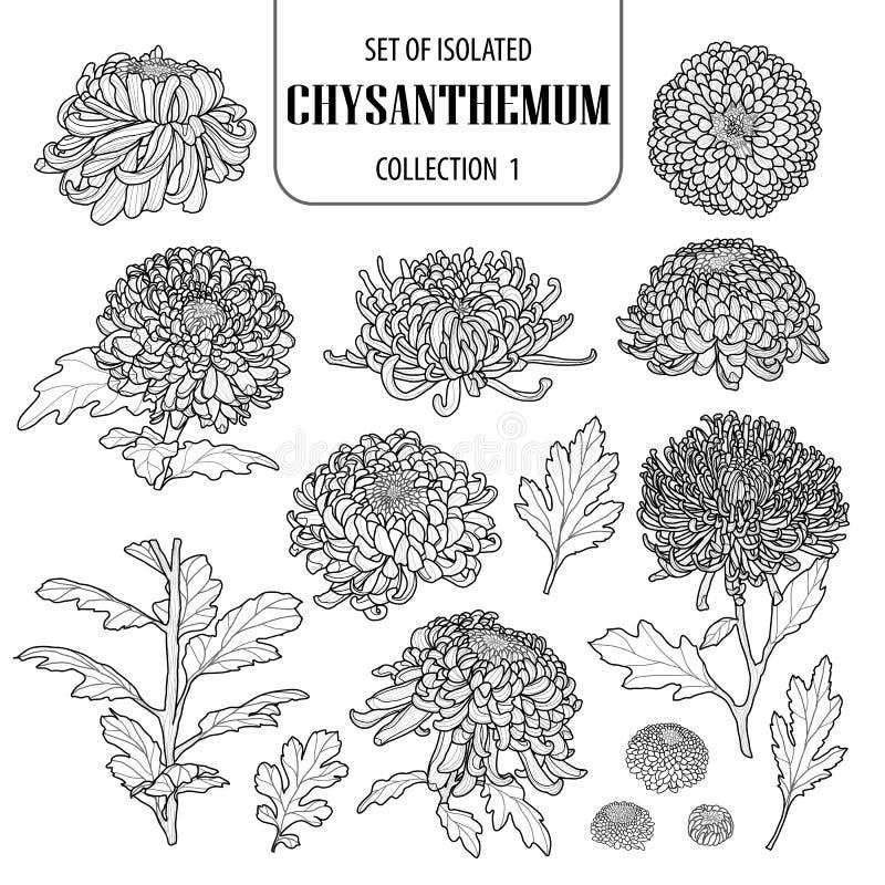 Reeks van geïsoleerde chrysanteninzameling 1 Leuke ter beschikking getrokken van de bloemillustratie stijl Zwart overzicht en wit vector illustratie