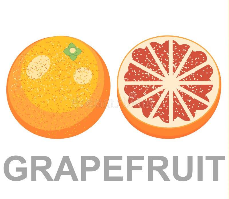 Reeks van geïsoleerde gekleurde roze grapefruits, de helft, plak, cirkel en geheel sappig fruit op witte achtergrond royalty-vrije illustratie