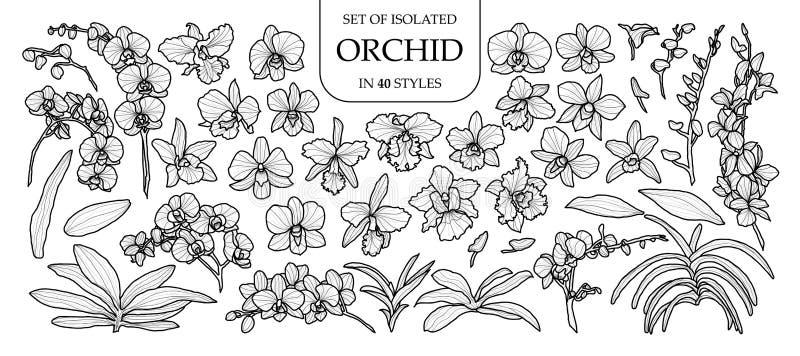 Reeks van geïsoleerde orchidee in 40 stijlen Leuke hand getrokken vectorillustratie in zwart overzicht en wit vliegtuig royalty-vrije illustratie