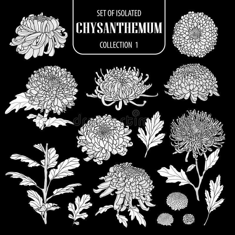 Reeks van geïsoleerde witte inzameling 1 van de silhouetchrysant Leuke hand getrokken bloem vectorillustratie in wit vliegtuig en stock illustratie