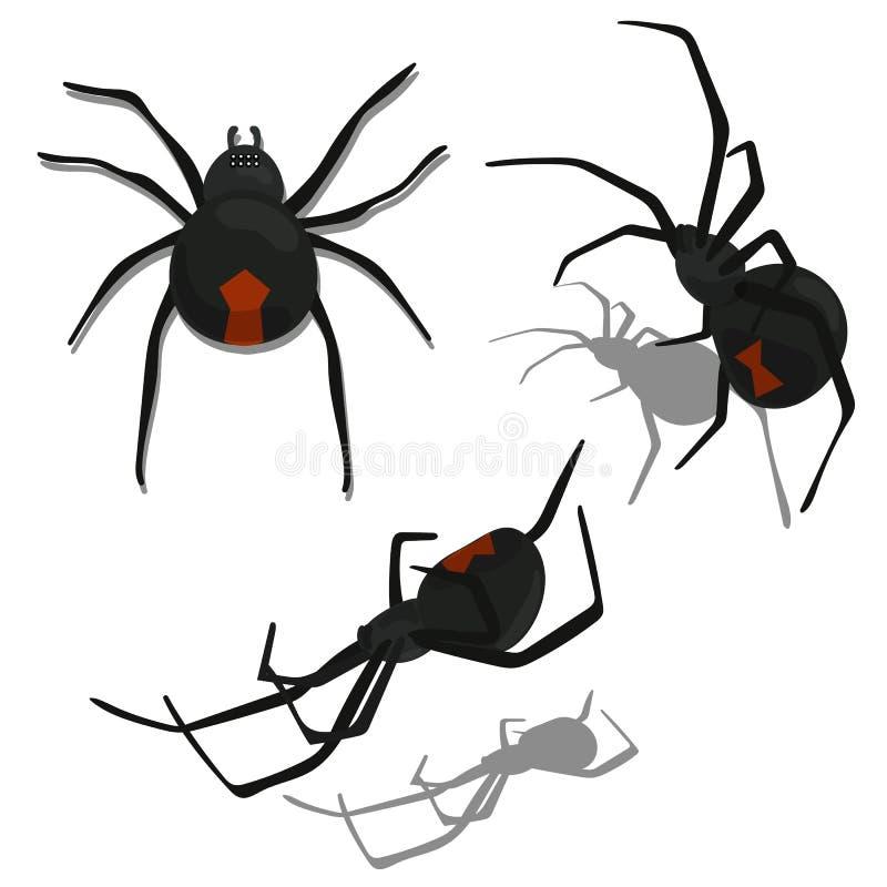 Reeks van Geïsoleerde Zwarte weduwespin vector illustratie