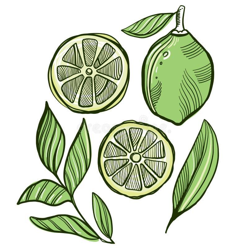 Reeks van geheel, halve, kwartkalk en glas limonade met ijs, de vectorillustratie van de schetsstijl vector illustratie