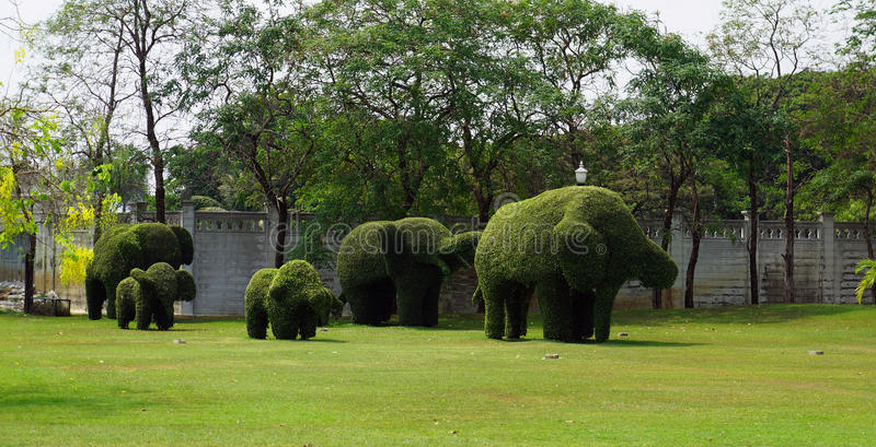 Reeks van gevormde struik in olifant royalty-vrije stock foto's